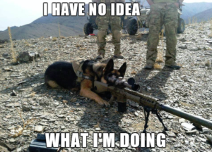 Dog with a big gun